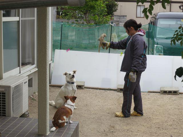 f:id:yasukazu01:20130423115314j:image