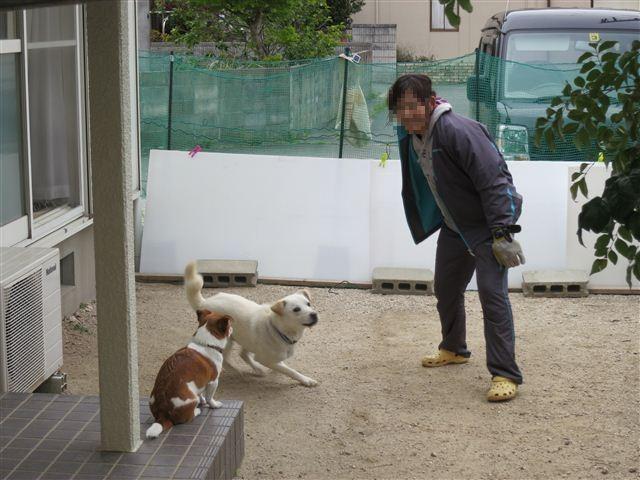 f:id:yasukazu01:20130423115318j:image