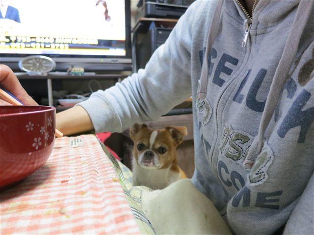 f:id:yasukazu01:20130423185030j:image