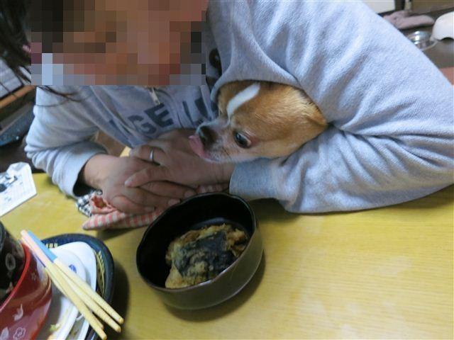 f:id:yasukazu01:20130423185559j:image