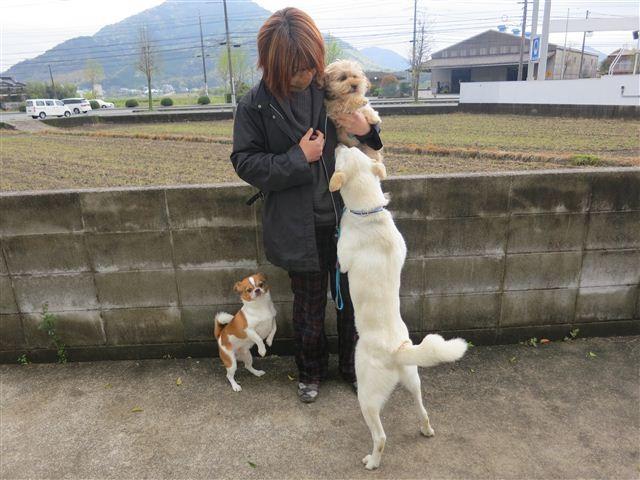 f:id:yasukazu01:20130424144738j:image