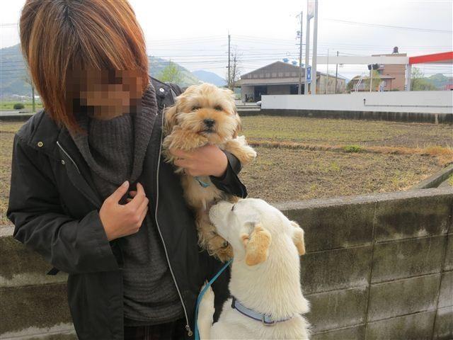 f:id:yasukazu01:20130424144743j:image