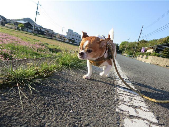 f:id:yasukazu01:20130502173811j:image