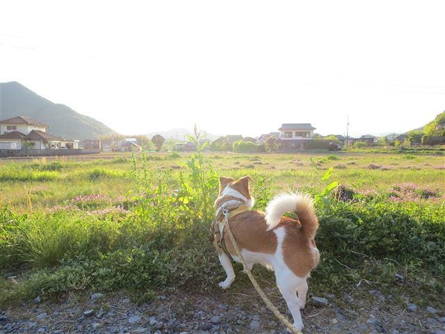 f:id:yasukazu01:20130502174310j:image