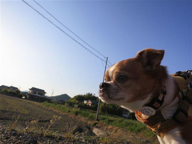 f:id:yasukazu01:20130502174348j:image