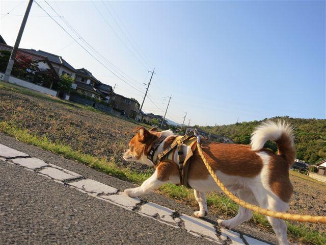 f:id:yasukazu01:20130502174719j:image