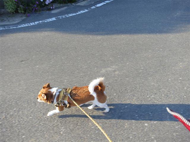 f:id:yasukazu01:20130502174739j:image