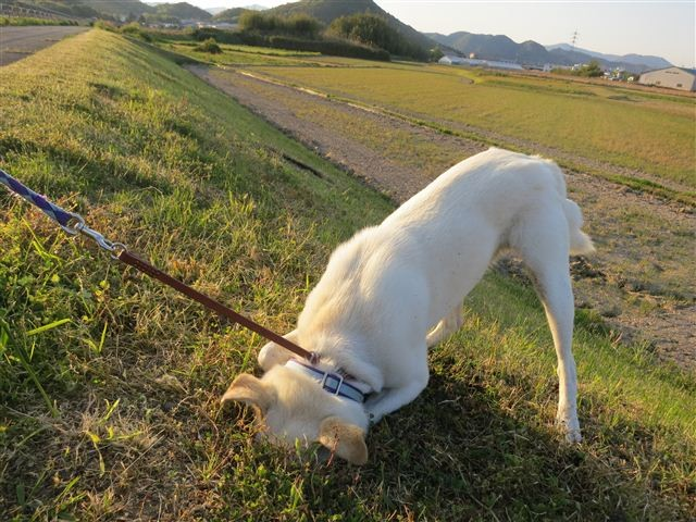f:id:yasukazu01:20130502180021j:image