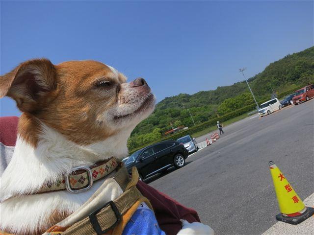 f:id:yasukazu01:20130506125710j:image