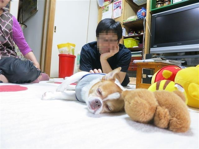 f:id:yasukazu01:20130506164801j:image