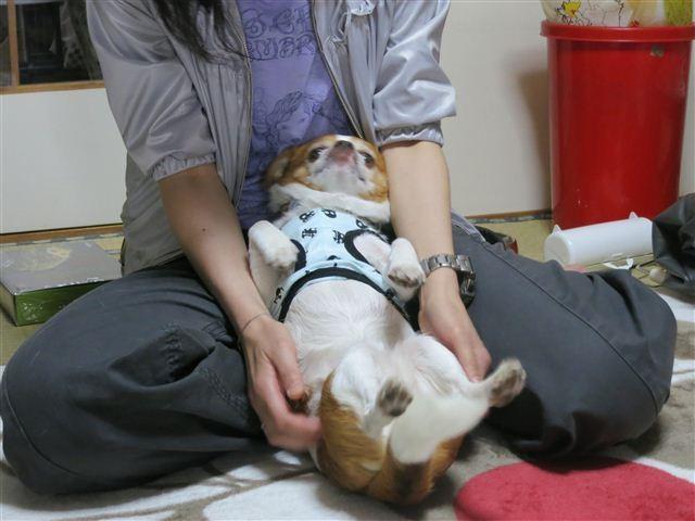 f:id:yasukazu01:20130507154641j:image