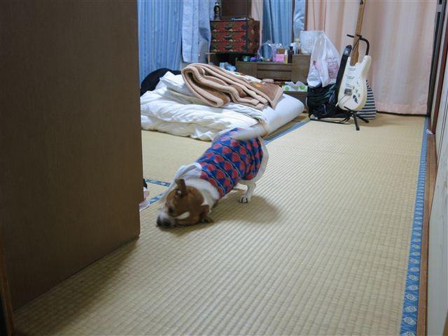 f:id:yasukazu01:20130507211143j:image