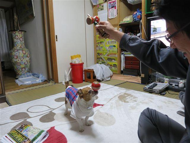 f:id:yasukazu01:20130508083441j:image