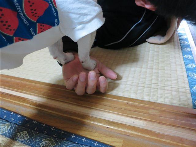 f:id:yasukazu01:20130508083933j:image