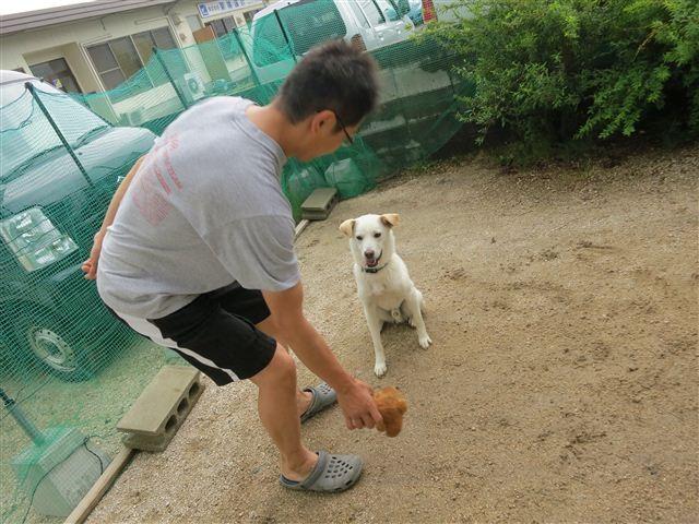 f:id:yasukazu01:20130530222128j:image