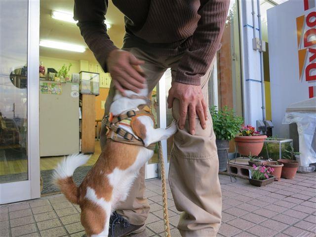 f:id:yasukazu01:20130531224229j:image