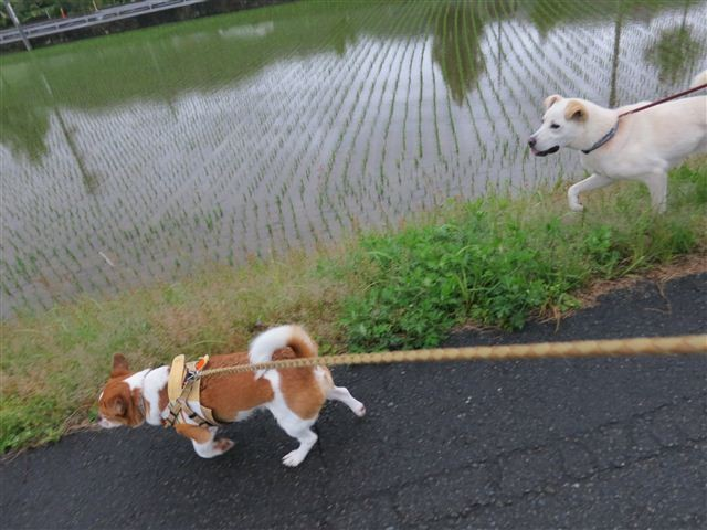 f:id:yasukazu01:20130603201137j:image