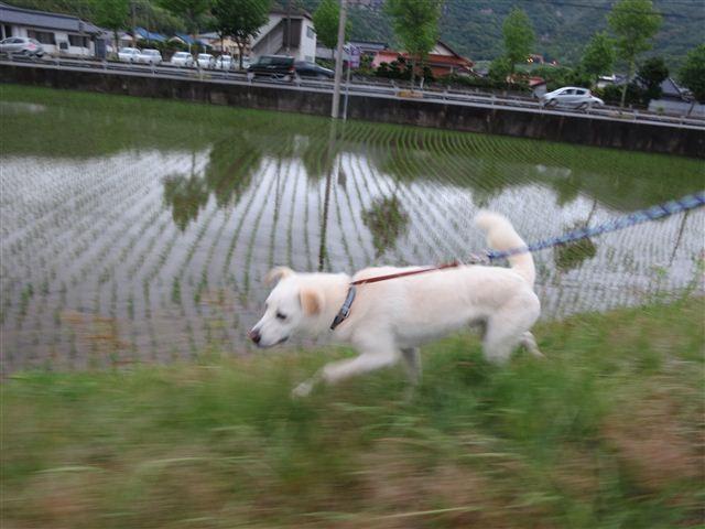 f:id:yasukazu01:20130603201230j:image