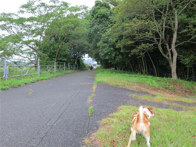 f:id:yasukazu01:20130603201703j:image