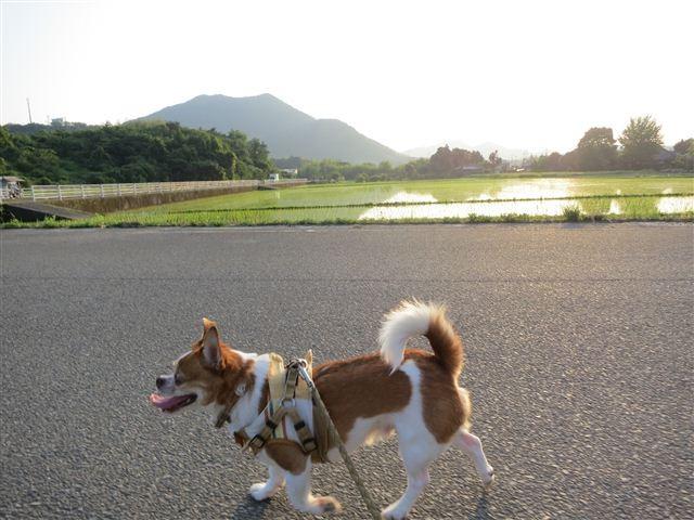 f:id:yasukazu01:20130605213544j:image