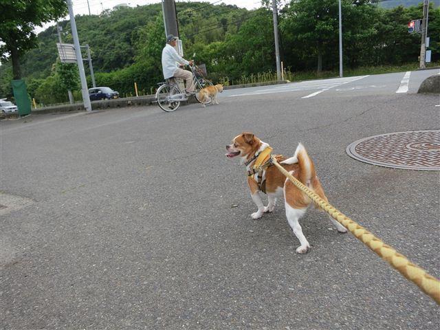 f:id:yasukazu01:20130611221825j:image