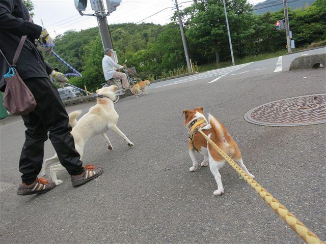 f:id:yasukazu01:20130611222004j:image