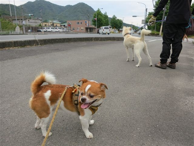 f:id:yasukazu01:20130611223400j:image