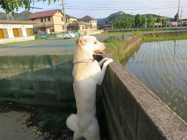 f:id:yasukazu01:20130623193029j:image