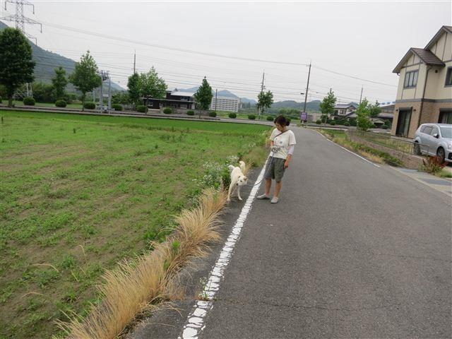 f:id:yasukazu01:20130624220826j:image
