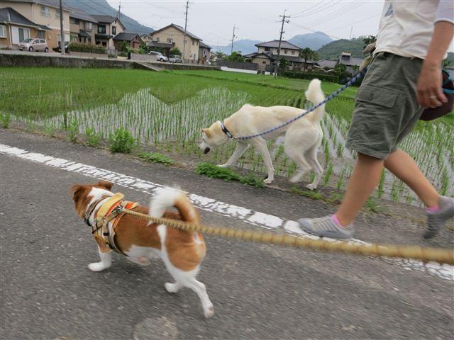 f:id:yasukazu01:20130624220941j:image