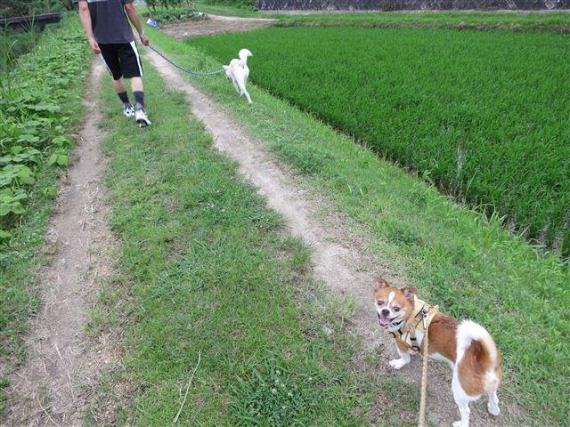 f:id:yasukazu01:20130625160857j:image