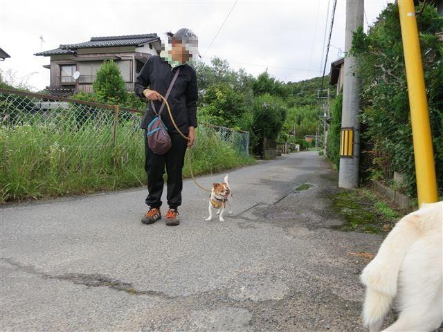 f:id:yasukazu01:20130702214527j:image