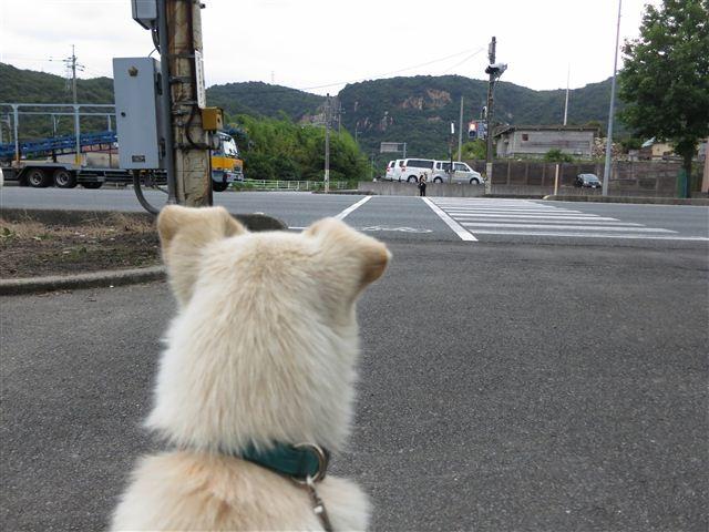 f:id:yasukazu01:20130705205058j:image