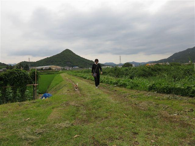 f:id:yasukazu01:20130705205819j:image