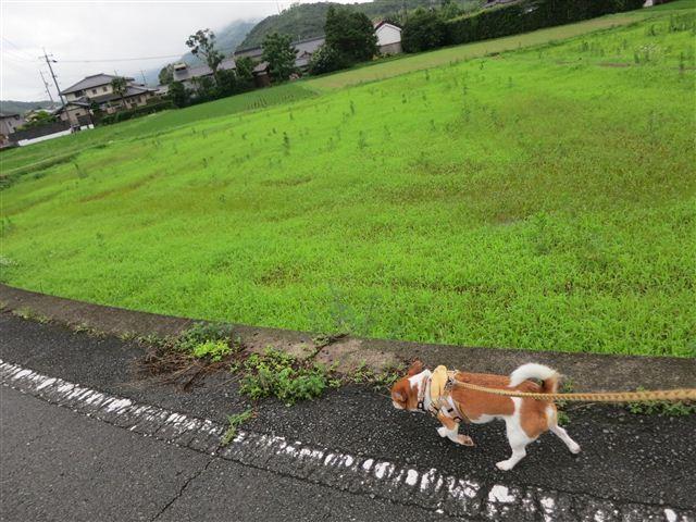 f:id:yasukazu01:20130706203109j:image