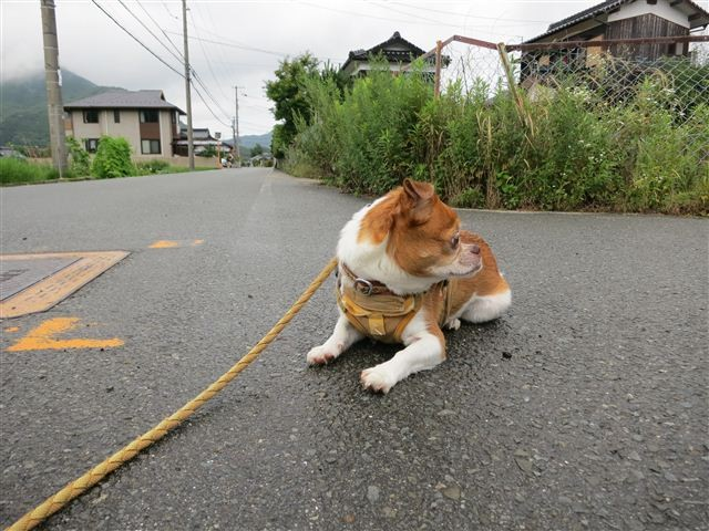 f:id:yasukazu01:20130706203514j:image