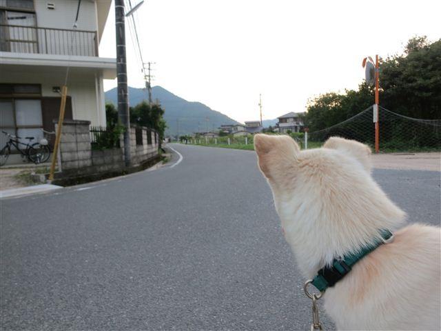 f:id:yasukazu01:20130711221305j:image