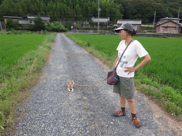 f:id:yasukazu01:20130713215741j:image