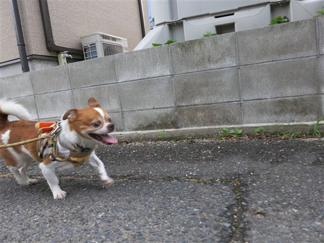 f:id:yasukazu01:20130713215925j:image