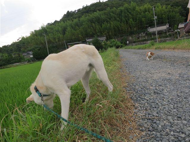f:id:yasukazu01:20130713220041j:image