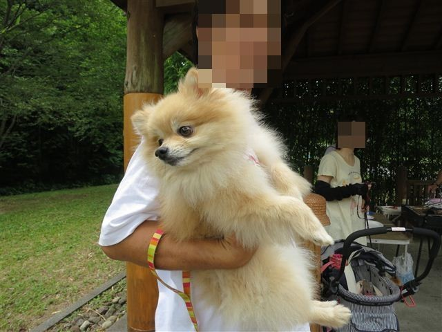 f:id:yasukazu01:20130717203430j:image