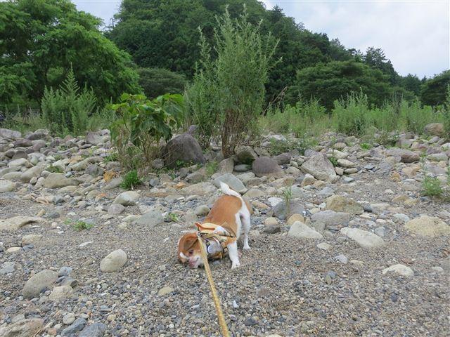 f:id:yasukazu01:20130719221711j:image