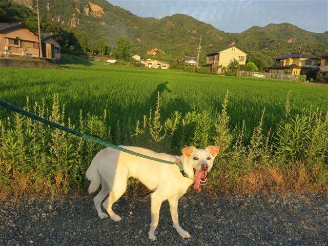 f:id:yasukazu01:20130725220854j:image