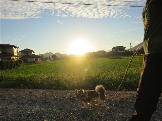f:id:yasukazu01:20130725221513j:image