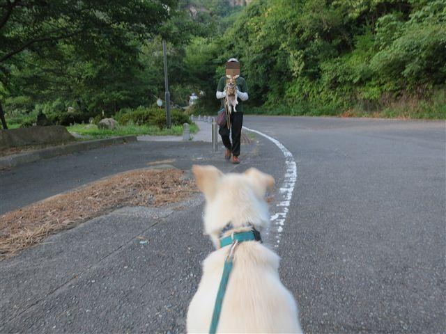 f:id:yasukazu01:20130726221707j:image
