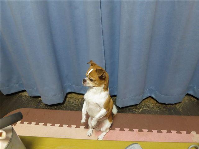 f:id:yasukazu01:20130804220607j:image