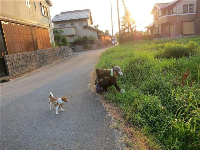 f:id:yasukazu01:20130806222228j:image