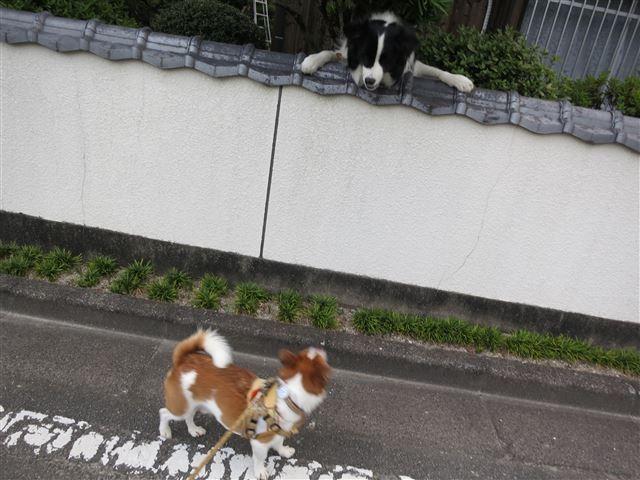 f:id:yasukazu01:20130806223107j:image