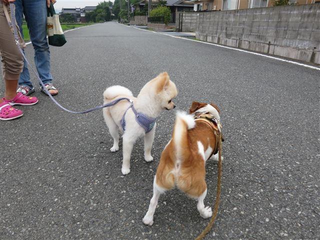 f:id:yasukazu01:20130809221244j:image