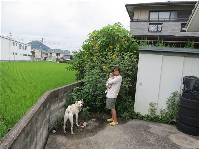 f:id:yasukazu01:20130814224220j:image